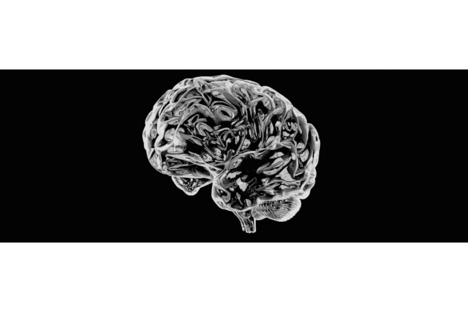 20191216_WuV_Brain